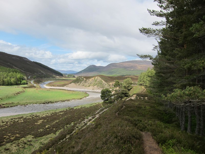 Paths into Feshie