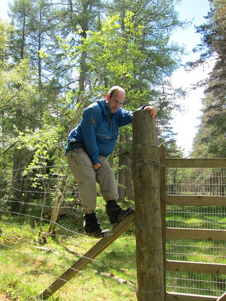 Hopping deer fencing nr. Abergeldie Castle (Mains of Abergeldie)