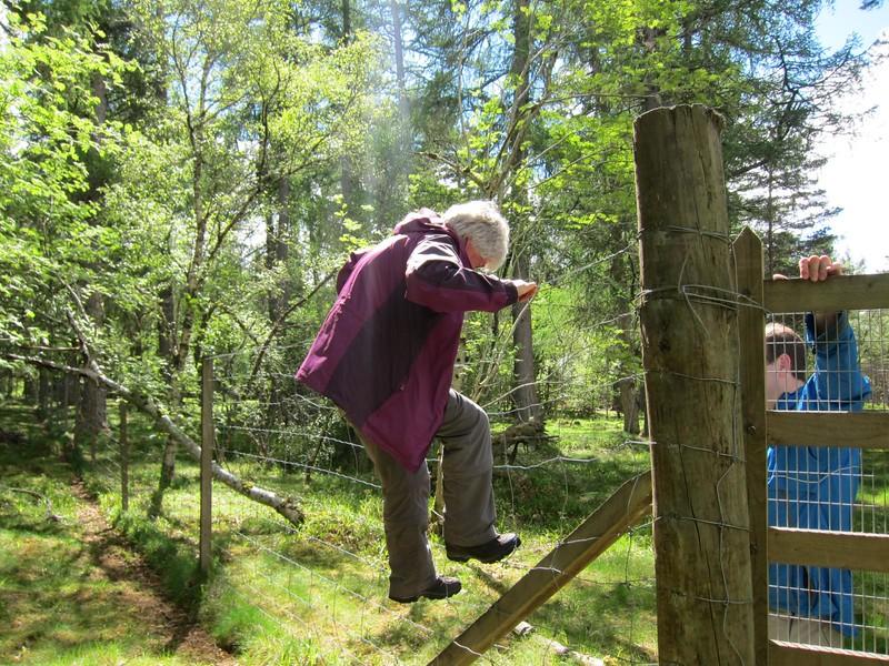 Hopping deer fencing nr. Abergeldie Castle (Mains of Abergeldie)