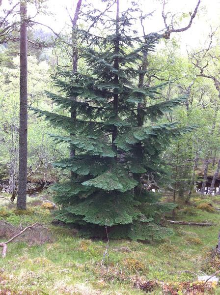 Woods above Loch Laggan