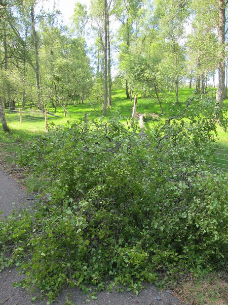 Lots of tree damage nr. Potarch