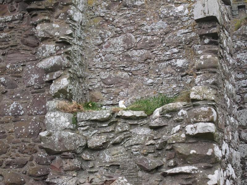 Visit to Dunnottar Castle
