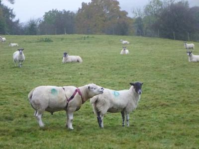 2012 October Herriot's Way England