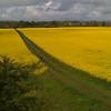 Fields near Hill of Morphie