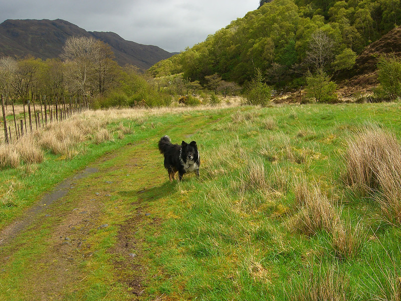 Helpful Dog on the way to Falls of Glomach