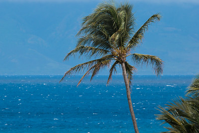 MauiPalmTreeOcean