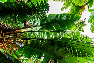 Maui-IaoNeedle-Leaves