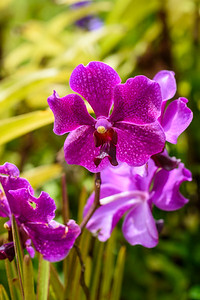 Oahu-DolePlantation-Orchid1