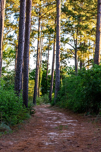 LostPinesWoodedTrail