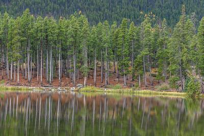 RMNP-TreeReflection