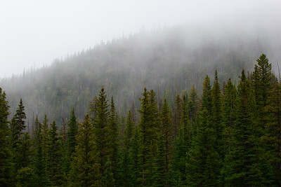 RMNP-Pinetrees2