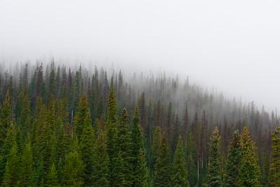RMNP-Pinetrees3