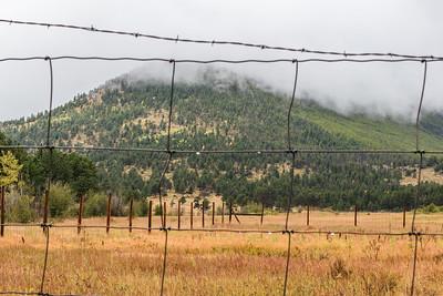 RMNP-Fence&Trees