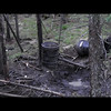 Dave Coldwell's Manitoba Black Bear Harvest
