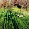 Shadow Hunting