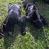 Chuck's and Dave V.'s black bears