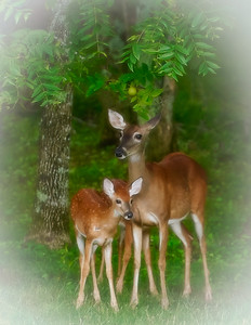 How Sweet - Doe with two Fawns