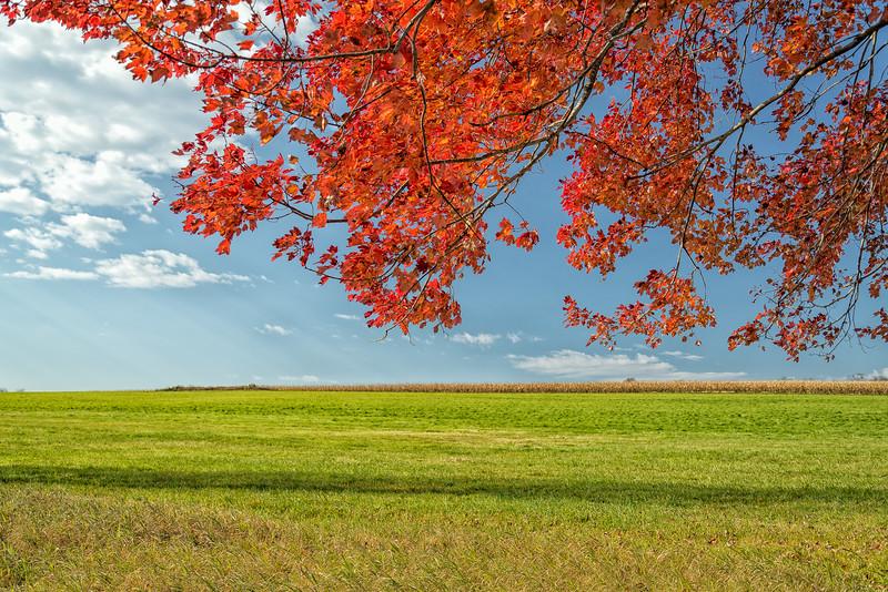 Autumn Breeze