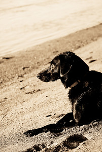 Not my doggy, but a nice doggy who was enjoying his first time at a beach :)