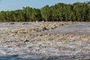 The Big Muddy - Or The Bow River - Harvey's Passage - Calgary Flood 2013