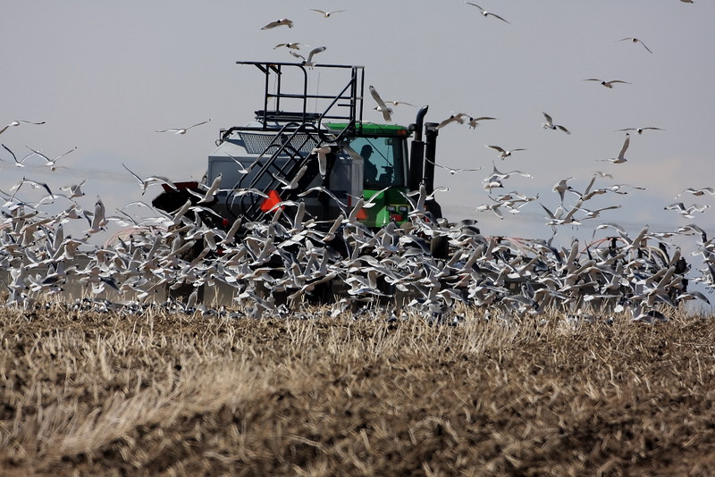 """Spring-time in Alberta with seeding operations underway<br />  <a href=""""http://ve6ab.blogspot.com/2008/05/in-zone.html"""">http://ve6ab.blogspot.com/2008/05/in-zone.html</a>"""