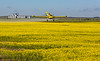 Air Tractor applying herbicides to a canola field.