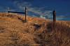Thorny Fence