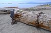 Logs Forgotten