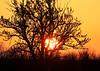 Sunrise - Mothers Day - Southern Alberta