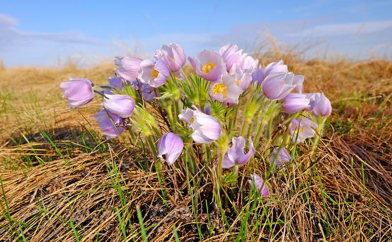 Prairie Bouquet