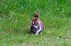 The Yard Rabbit