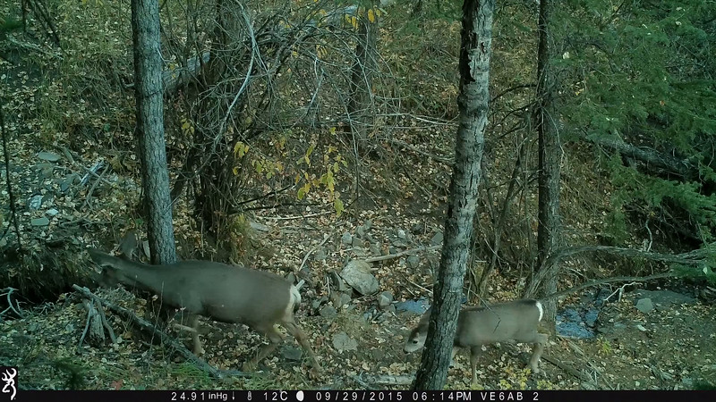 Browning Trail Cam Video