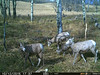 Trail Camera Capture