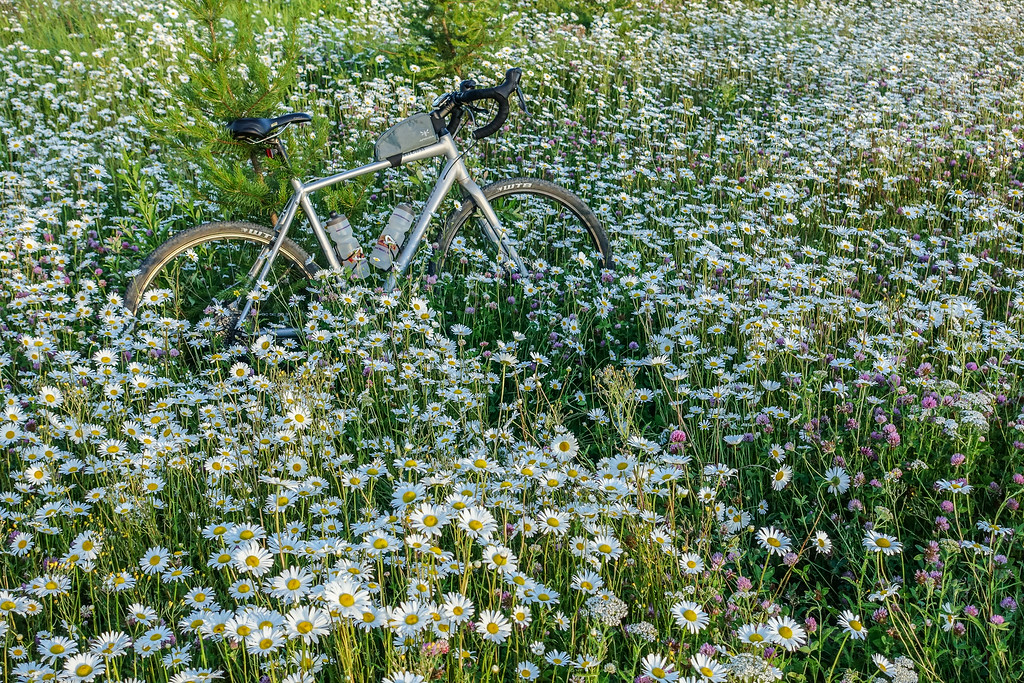 """BIKING 01179<br /> <br /> """"Taking a break in a field of daisies""""<br /> <br /> Grand Portage State Forest, MN"""