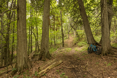 "BIKING 01266  ""Cedar Grove on Skookum Trail""  Britton Peak singletrack trails near Tofte, MN"