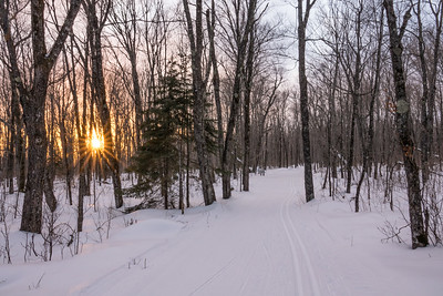 """Sunset on the Maple Loop"""
