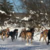 Credit: Jade Frank/FCVB<br /> <br /> A musher and dog team race down a frozen slough in Fairbanks during the Open North American Championship Sled Dog Race.