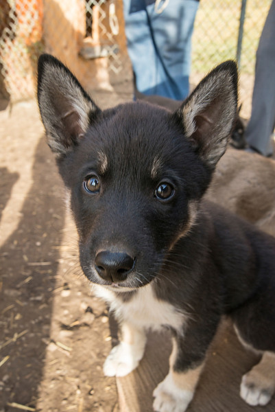 A summer visit to Paws for Adventure Sled Dog Tours.