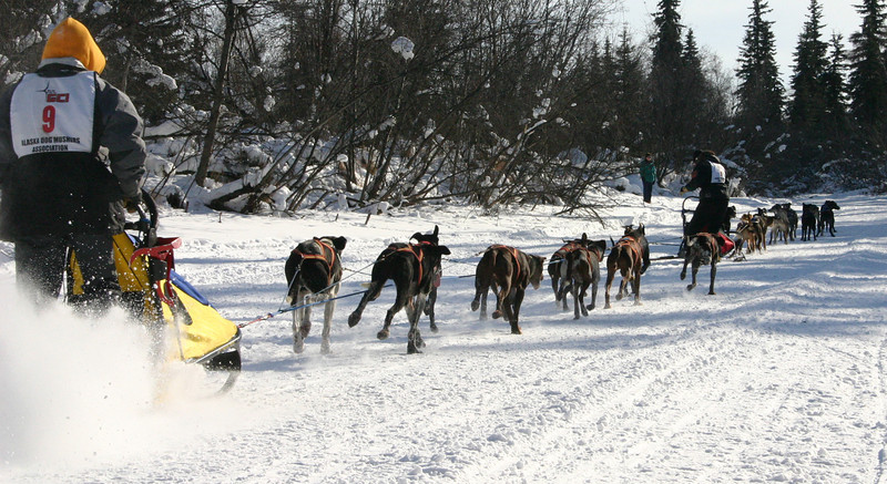 Credit: Jade Frank/FCVB<br /> <br /> Mushers and dog teams race down a frozen slough in Fairbanks during the Open North American Championship Sled Dog Race.