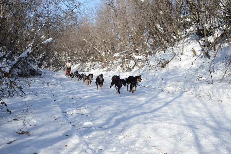 Dog mushing in Fairbanks, Alaska.
