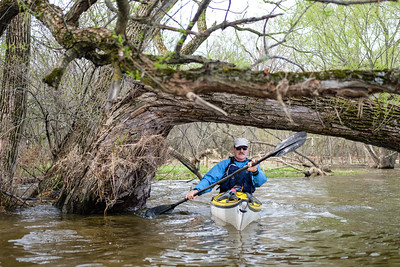 Senior male paddling through willow trees on a the Rideau River in spring flood
