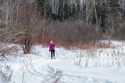 "Skiing the ""S"" curve boardwalk in the Mer Bleue bog"