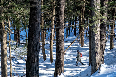 Solo male snowshoeing through a mature hemlock grove