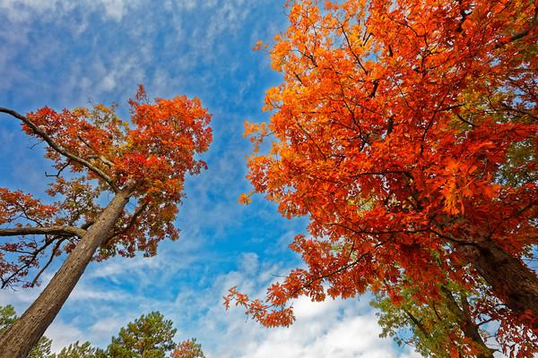 Fall color-1-d