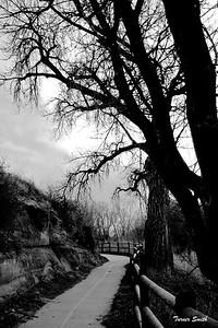 Gloomy Path