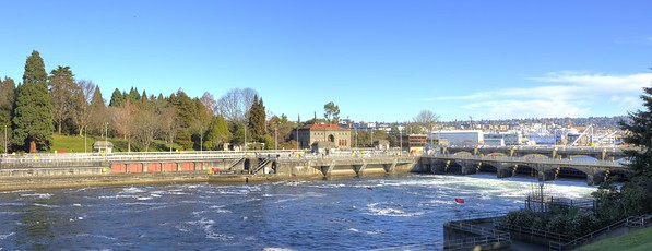 Ballard Locks - Jan 2015 - 60 plus day