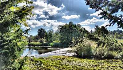Cell Pic Edit of Marymoor Park Sept 2014