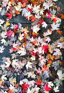 November Leaf Walk 2015