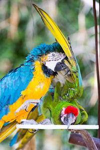 Parrot and Macaw