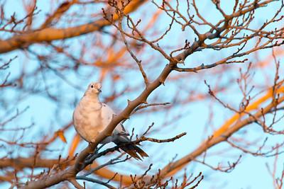 Winter Bird at Sunrise
